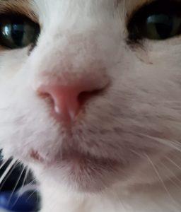 Ozzy the cat